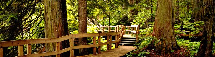 Mount Revelstoke National Park Giant Cedars Boardwalk