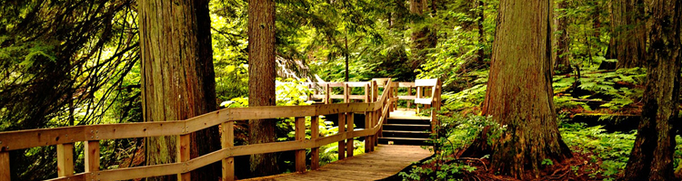 Mount Revelstoke National Park Giant Cedars Boardwalk