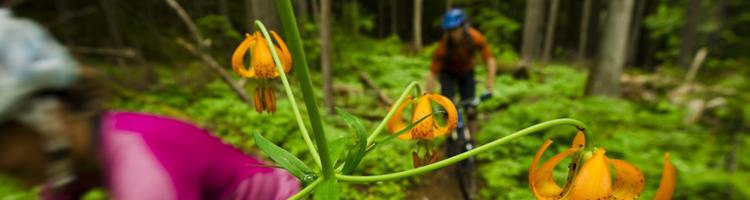 Revelstoke Mountain Biking